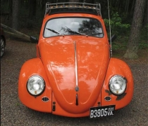 Roberts-Orange-Beetle-03